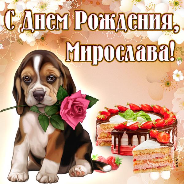 Поздравление с днем рождения мирославу 8 лет